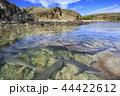 入り江に繁殖のために集まったネムリブカ 小笠原 44422612