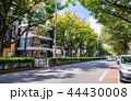 東京 表参道 44430008