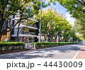 東京 表参道 44430009
