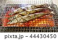 秋刀魚 44430450