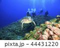 アオウミガメ ダイバー 小笠原の写真 44431220