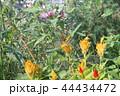 花と蝶 44434472