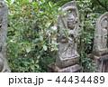 金木犀と仏像 44434489