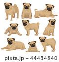 パグ わんこ 犬のイラスト 44434840