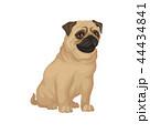 わんこ 犬 パグのイラスト 44434841