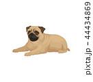 パグ わんこ 犬のイラスト 44434869