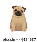 パグ わんこ 犬のイラスト 44434957