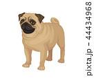 動物 パグ わんこのイラスト 44434968