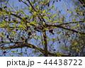 榛の木 ハンノキ 花言葉は「不屈の心」 44438722