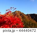 紅葉と那須朝日岳 44440472