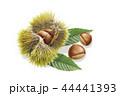 栗 実 秋の味覚のイラスト 44441393