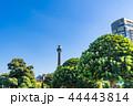 横浜 マリンタワー 風景の写真 44443814
