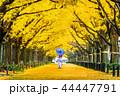 銀杏 公孫樹 イチョウの写真 44447791