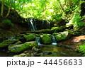 猿壺の滝 滝 渓流の写真 44456633