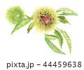 栗 秋の味覚 毬栗のイラスト 44459638