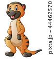 Vector illustration of Cute meerkat cartoon 44462570