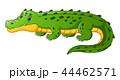 アリゲータ アリゲーター ワニのイラスト 44462571