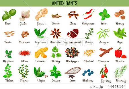 Antioxidant food, herbs and spices. healthy lifestyle. Super food anthocyanins, vector illustration 44463144