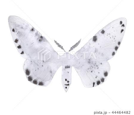 Peppered moth light form illustration on white. 44464482