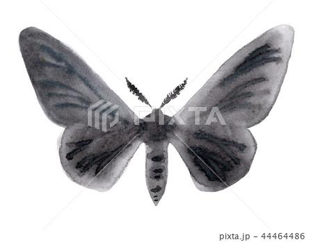 Peppered moth melanic form illustration on white. 44464486