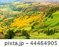 (群馬県)渋峠から望む、紅葉した芳ヶ平湿原 44464905