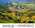 (群馬県)渋峠から望む、紅葉した芳ヶ平湿原 44464912