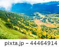 (群馬県)渋峠から望む、紅葉した芳ヶ平湿原 44464914