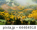 (群馬県)渋峠から望む、紅葉した芳ヶ平湿原 44464918