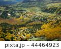 (群馬県)渋峠から望む、紅葉した芳ヶ平湿原 44464923