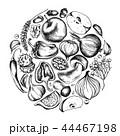 タマネギ 玉ねぎ 玉葱のイラスト 44467198