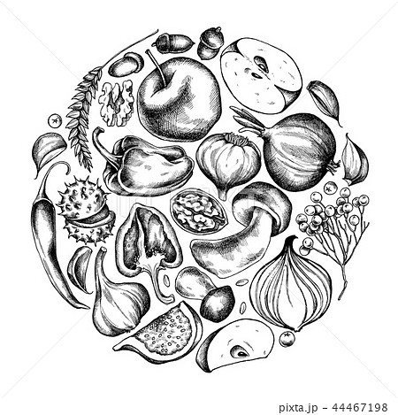 Vector collection of hand drawn autumn vegetables round shape 44467198