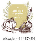 Vector collection of hand drawn autumn vegetables 44467454