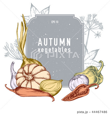 Vector collection of hand drawn autumn vegetables 44467486