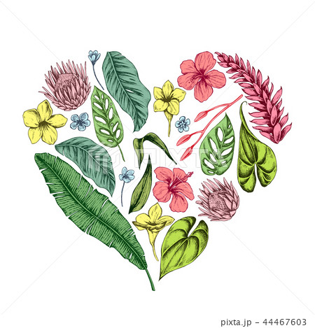 Vector collection of hand drawn tropical plants 44467603