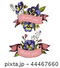パンジー フローラル 植物のイラスト 44467660