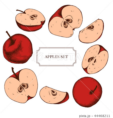 Vector collection of hand drawn apples highly detailed 44468211