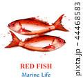 サカナ 魚 魚類のイラスト 44468583