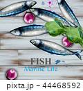 水彩画 サカナ 魚のイラスト 44468592