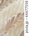 白身魚 平目 鯛の刺身 44477556