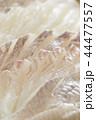白身魚 平目 鯛の刺身 44477557