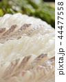 白身魚 平目 鯛の刺身 44477558