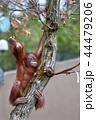 木登り名人 44479206