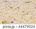 ビーチ 砂浜 米原ビーチの写真 44479324
