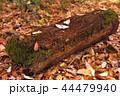 背景 落ち葉 枯れ葉の写真 44479940