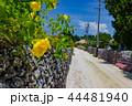 ハイビスカス 竹富島 晴れの写真 44481940