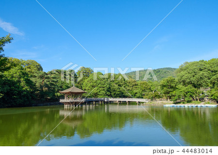 奈良公園の浮見堂 44483014