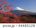富士山 山 梅の写真 44483126