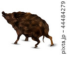 亥 亥年 猪のイラスト 44484279