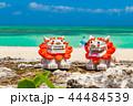 シーサー コンドイビーチ 海の写真 44484539