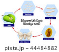 Science silkworm life cycle 44484882